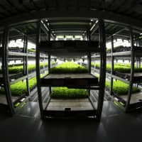 Lettuce is cultivated at Spread Co.'s plant in Kameoka, Kyoto Prefecture, on Oct. 2. | PHOTOGRAPHER: TOMOHIRO OHSUMI/BL