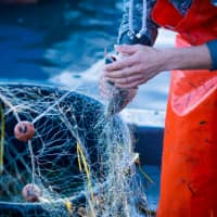 Japan plans to revise its fishery laws for the first time in 70 years to encourage more people to join the declining industry. | GETTY IMAGES