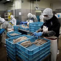 Employees work at a squid processing plant in Sakata, Yamagata Prefecture, on June 5. | REUTERS