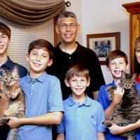 Family fantastic: Kittens Tiger and Sazzles find a fun-filled home in Kanagawa
