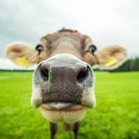 It's time to rethink animal agriculture