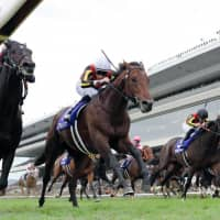 Stelvio (second from left) and jockey William Buick finish just ahead of the pack at the Mile Championship in Kyoto on Sunday. | KYODO