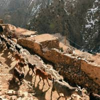 A Morroccan sheperd leads his goats on a path in the village of Taghzirt, in Morocco's el-Haouz province in the High Atlas mountains in March. The bodies of two Scandinavian women with cuts to their necks were found in a village in Morocco's High Atlas mountains on Monday, the interior ministry said. The tourists, a Danish woman and another from Norway, were found with 'signs of violence' on their necks caused by a cutting device, the ministry said in a statement. | AFP-JIJI
