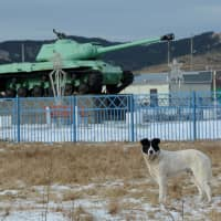 A dog stands in front of a Soviet IS-2 tank, a World War II monument, in the village of Malokurilskoye on the island of Shikotan in 2016. | REUTERS