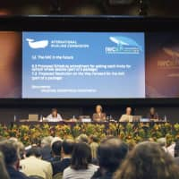 A general meeting of the International Whaling Commission is held in September in Florianopolis, Brazil. Japan plans to announce its withdrawal from the commission on Wednesday.   KYODO