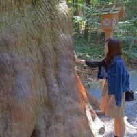 Animism: A visitor touches a tree in the forest at the Grand Shrines of Ise for good luck. | STEPHEN MANSFIELD