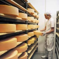 New challenges for the Japanese cheese market