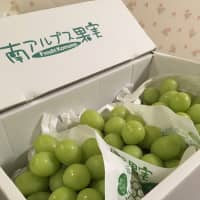 Fancy fruit: A box of grapes from Minami Alps City in Yamanashi Prefecture was of the quality you usually see in upscale supermarkets. | MICHAEL HASSETT