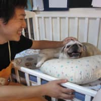 Dogged by old age, pets are put into care