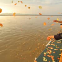 Members of the Agon Shu delegation scatter offerings on the Irrawaddy River on Nov. 11. | AGON SHU