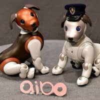 Versions of Sony's puppy-sized robot dog Aibo are displayed during a news conference at the company's headquarters in Tokyo on Wednesday. | AFP-JIJI