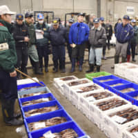 Squid profits squeezed as Japan's catch hits record lows