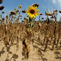 Last year was fourth-warmest and man-made greenhouse gases rose, says EU's Copernicus