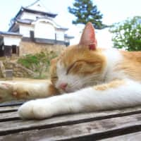 'Cat lord' of castle in western Japan boosts tourism after rain disaster