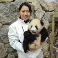 Life of a panda breeder in Japan is no walk in the park