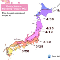 A forecast map released by Japan Meteorological Corp. shows when cherry trees are expected to start blooming across Japan. | JAPAN METEOROLOGICAL CORP.