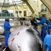 Japanese government pushes back against New York Times editorial on whaling