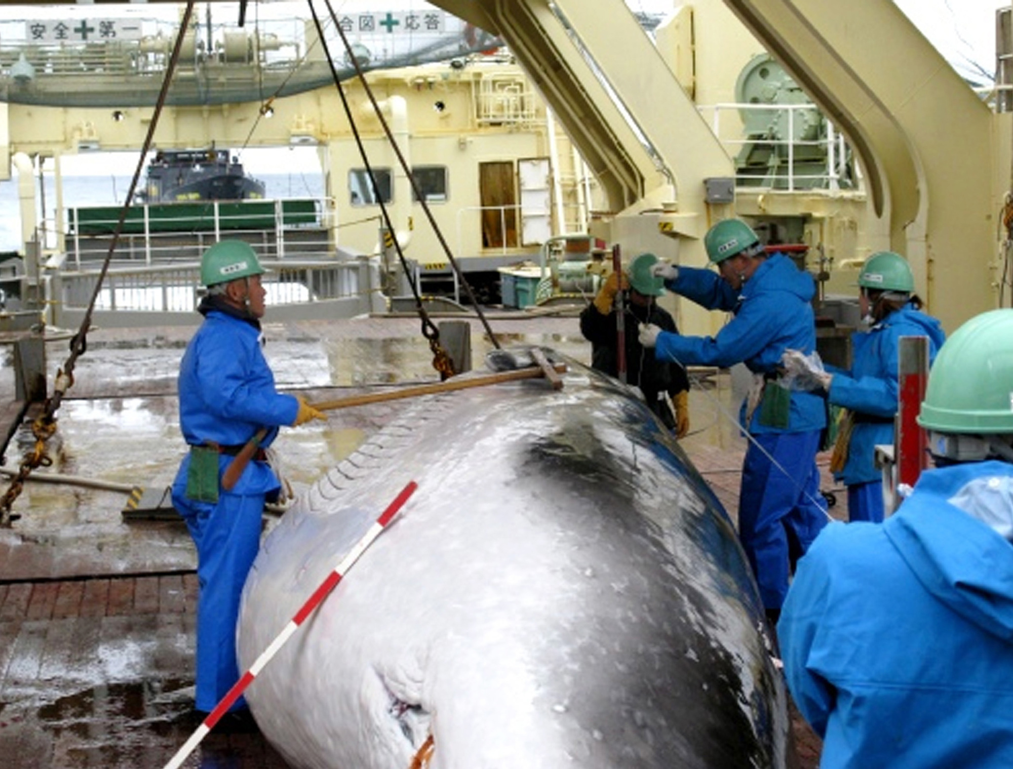 A captured minke whale is measured on the deck of the Japanese whaling ship the Nisshin Maru in Antarctica's Ross Sea in February 2009. | AP