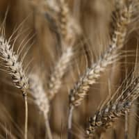 Although about 6,000 plant species can be used for food, only nine make up most of the world's total crop production.   REUTERS