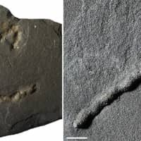 Earth's earliest mobile organisms lived 2.1 billion years ago, Gabon shale fossils indicate