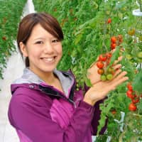 Ayaka Miura, president of cherry tomato producer Drop Inc., shows tomatoes grown in a greenhouse at the company's Drop Farm in Mito, Ibaraki Prefecture. | KYODO