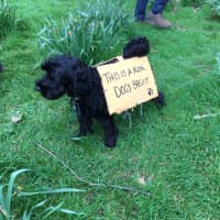 A dog with a sign tied to it is seen as thousands of EU supporters attending a 'People's Vote' march in central London on Saturday called on the government to give Britons a vote on the final Brexit deal. | REUTERS