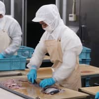 Foreign workers helping Tohoku seafood companies recover from 2011 quake and tsunami