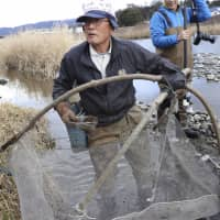 Shoji Nakamura prepares to scoop aquatic insect larvae from the bed of Tenryu River in Nagano Prefecture. | KYODO