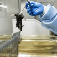 Genetically modified mice at $17,000 a pair in high demand as China bids to be biomedical powerhouse