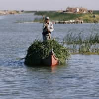 An Iraqi Marsh Arab paddles his boat as he collects reeds at the Chebayesh marsh in Dhi Qar province, Iraq, April 14. | REUTERS