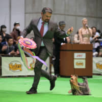 Pooches put their best paw forward at Japan International Dog Show