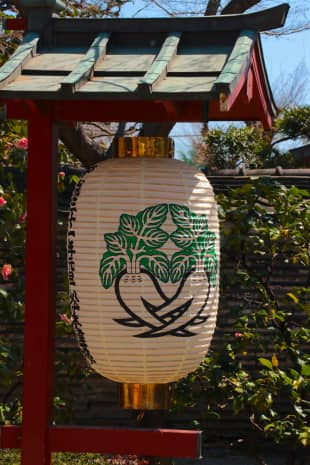 Unearth your ... vegetables?: At Matsuchiyama Shoden temple, daikon radishes represent the ignorant part of one