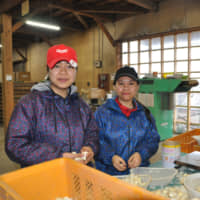Le Thi Anh Ngoc (left) and Hoang Thi Diem Lien work at Aoyama Japan Farm Co. in Gonohe, Aomori Prefecture, on March 11. | KYODO