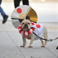 A dog attends festivities surrounding Emperor Naruhito's first public appearance at the Imperial Palace in Tokyo on Saturday.   RYUSEI TAKAHASHI