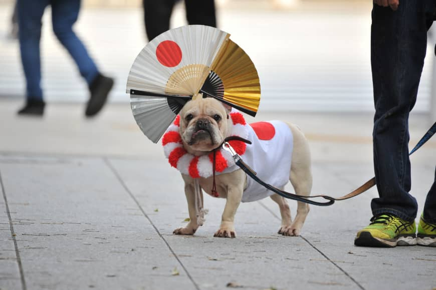 A dog attends festivities surrounding Emperor Naruhito