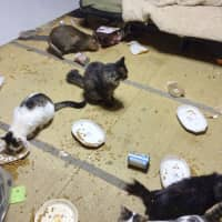 Food and garbage are strewn across a tatami room at a home where too many pets have been kept. | JAPAN ANIMAL WELFARE SOCIETY / VIA KYODO