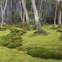 Dense moss at Giouji, a temple garden inspired by a tea aesthetic.   STEPHEN MANSFIELD