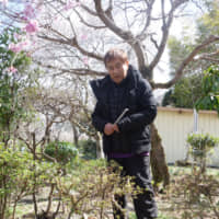 Hiroshi Yagi examines a location where the mysterious canine was spotted. | ALEX MARTIN