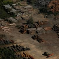 Piles of wood are seen during 'Operation Green Wave' conducted by agents of the Brazilian Institute for the Environment and Renewable Natural Resources, or Ibama, to combat illegal logging in Apui, in the southern region of the state of Amazonas, Brazil, in 2017. | REUTERS