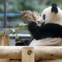 Loan period for Ueno zoo's crowd-pulling giant panda cub Xiang Xiang extended until end of 2020