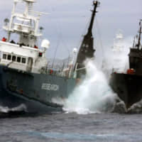 Sea Shepherd in Australia eyes measures against Japanese whaling