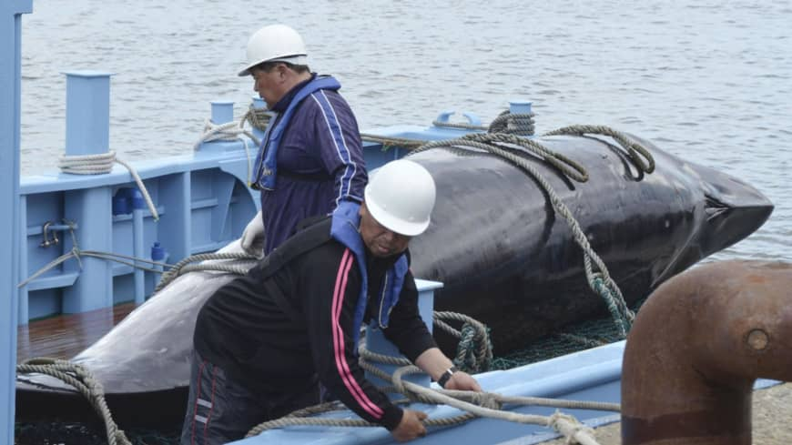 Japan's return to commercial whaling brings criticism from conservationists and praise from industry players