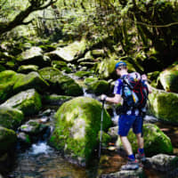 Babbling brook: The Shiratani Unsuikyo trail meanders through a landscape of ancient cedar forests that provided inspiration for Studio Ghibli's 'Princess Mononoke.' | OSCAR BOYD