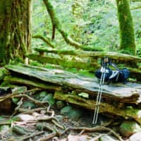 Starry-eyed and lost to the forests of Yakushima