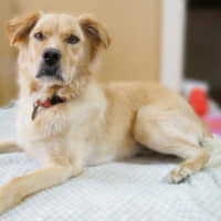Always a holiday: Want to have Christmas all year long? Well then check out this dog, whose name is Christmas, and think about bringing him into your home. | MACHIKO NAKANO