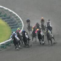 JRA bans horses over feed additive
