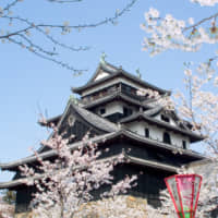 Matsue Castle is recognized as one of Japan's national treasures. The park surrounding the castle is also designated as a historic monument and appears regularly in such rankings as 'Japan's Top 100 Cherry Blossom Viewing Sites' and 'Japan's Top 100 Historical Parks.'