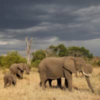Elephant and rhino populations rebounding in Tanzania after crackdown on poaching