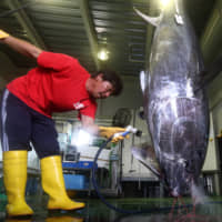 Japan to propose larger quotas for Pacific bluefin tuna