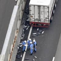 Five tons of fish scatter across 500 meters of highway in Osaka Prefecture